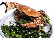 Levende Noordzee Krab