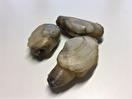 Otterschelp